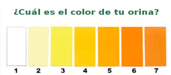 conoce-el-significado-del-color-de-tu-orina.jpg