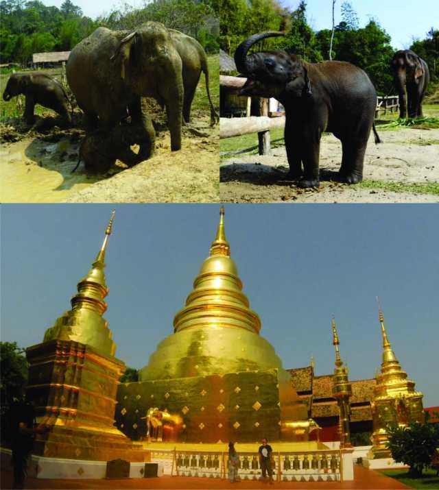 program-d-c-e-temples